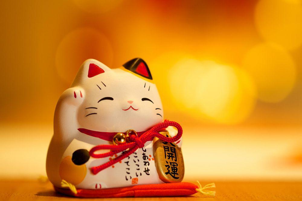 5 Fakta Menarik Kucing Pembawa Keberuntungan Harian Inhua Online
