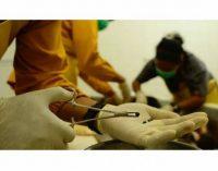 130 Butir Peluru Bersarang di Tubuh Orangutan