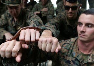 Momen Pelatihan Bertahan Hidup Militer Bersama dari 24 Negara di Cobra Gold Thailand
