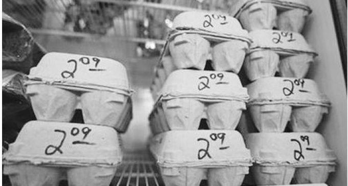"""美国召回超2亿枚""""问题鸡蛋""""  疑被沙门氏菌感染"""